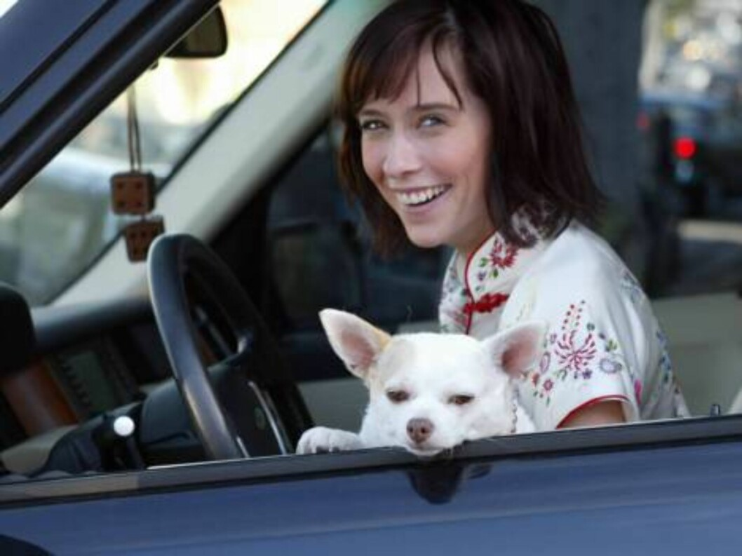 <strong>Code:</strong>X17XX8-Tuan Pham, California, USA, 15.11.2004: Singer / Actress Jennifer Love Hewitt rushes her dog to the animal hosptal for a bladder infection. She comes out with special food, happy that her dog is fine. All Over Press / X17 Picture Agency / Tu Foto: All Over Press