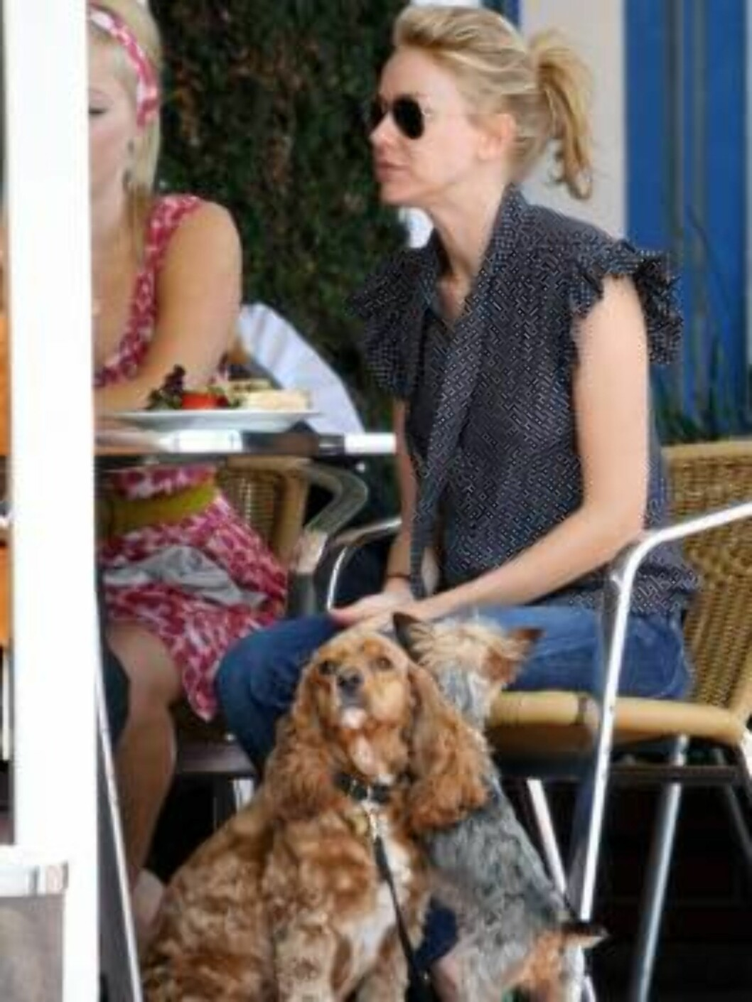 Naomie Watts going shopping with her dogs despite a sign forbiding pets _Fred Seagal and Maxfield_ June 12, 2006 X17agency exclusive Foto: All Over Press