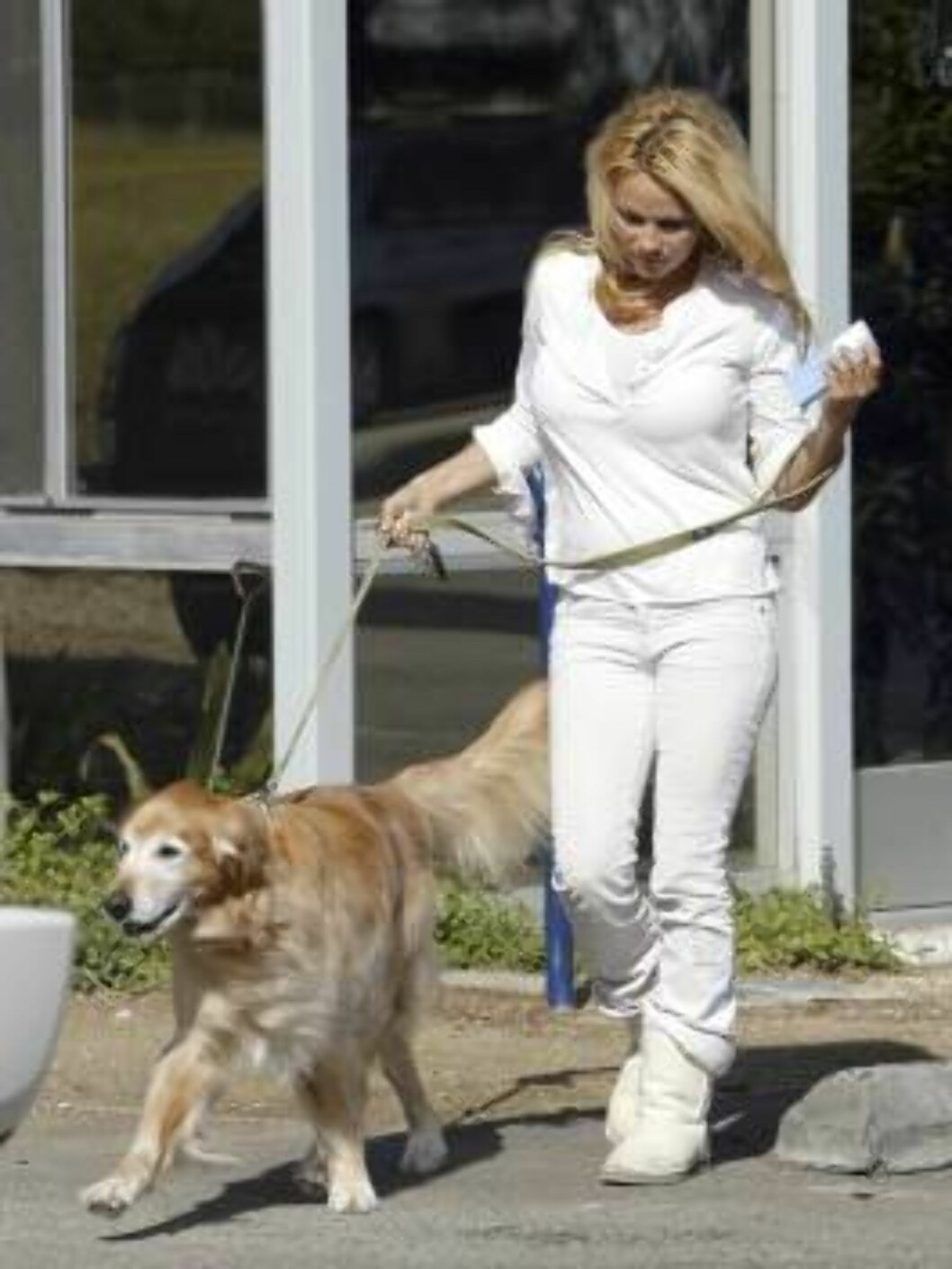Pamela Anderson takes her lab to the vet in Malibu. March 9, 2006 X17agency EXCLUSIVE Foto: All Over Press