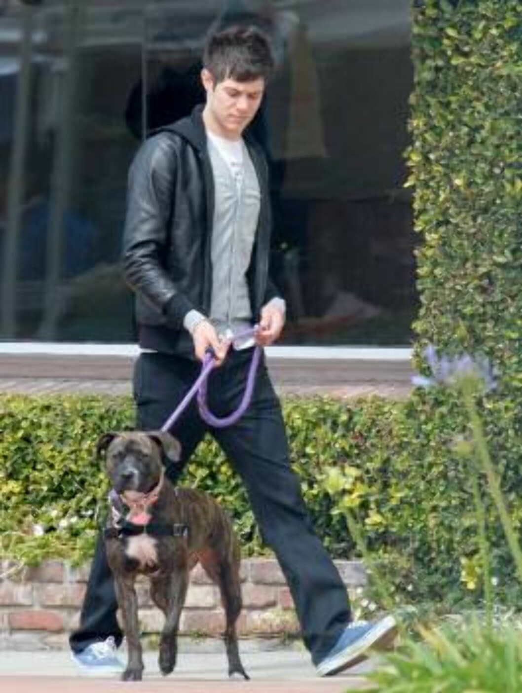 OC star Adam Brody walking his dog in Hollywood. March 24, 2006 X17agency EXCLUSIVE / ALL OVER PRESS Foto: All Over Press