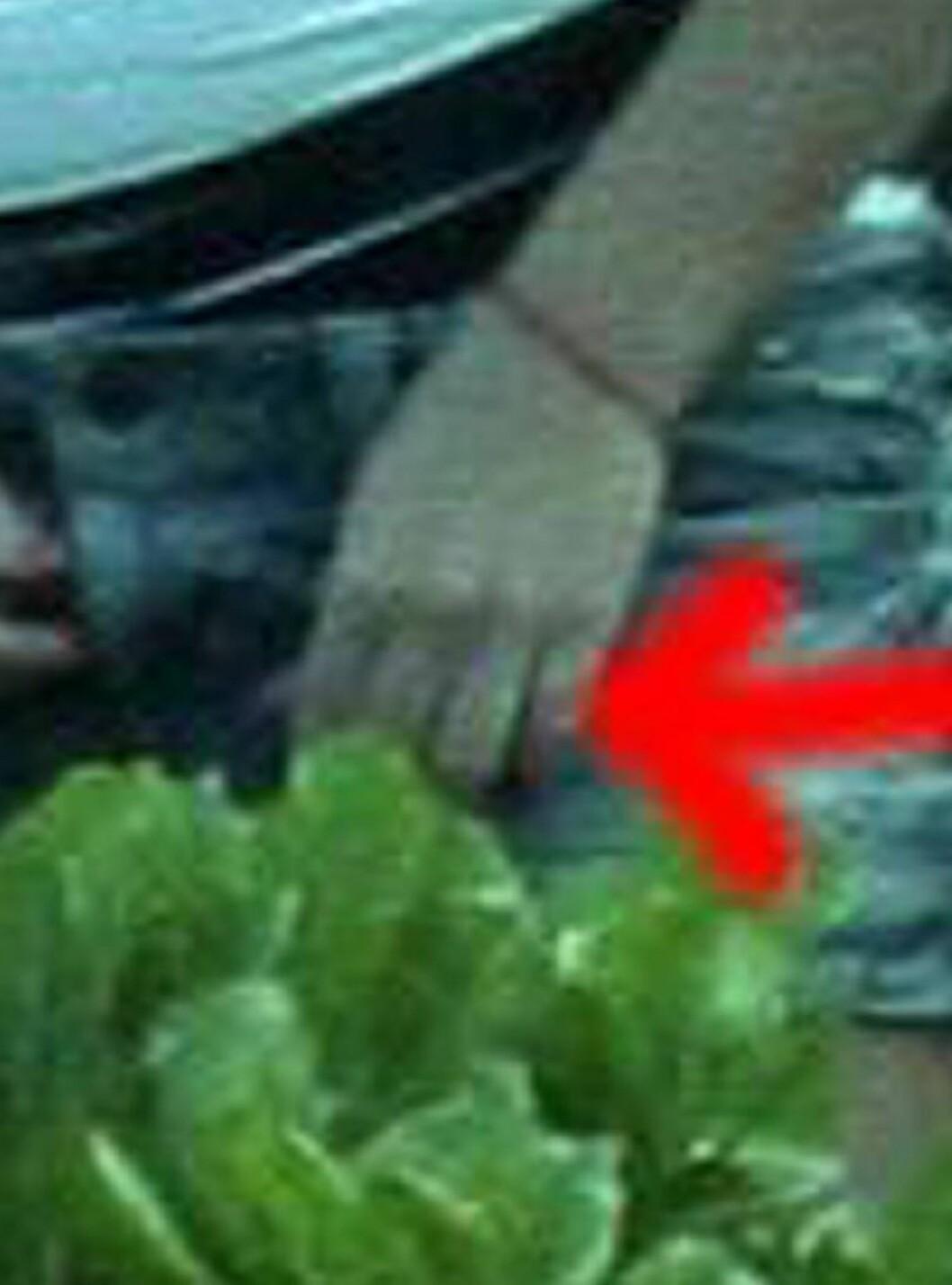 <strong>UTEN RING:</strong> På Hawaii ble Britney observert uten ring... Foto: All Over Press