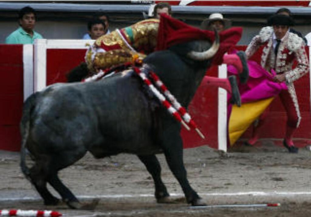 KASTES AVSTED: Etter å ha satt hornet i tyrefekteren, rister oksen ham kraftig og kaster Tomas avgårde. Foto: AFP