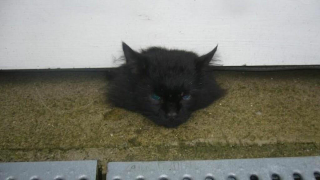 KLEMT I GARASJEPORTEN: Dette bildet fant katteeier Mari Rosland på Facebook. En sambygding hadde lagt ut makabre bilder av hennes døde katt. Foto: Privat.