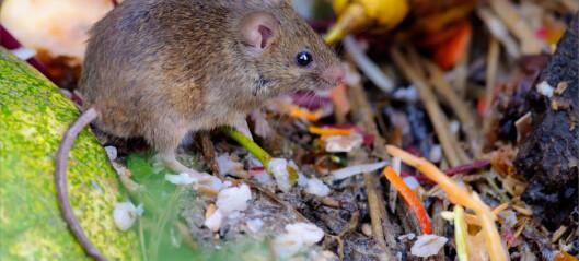 Slik unngår du å få mus i hus