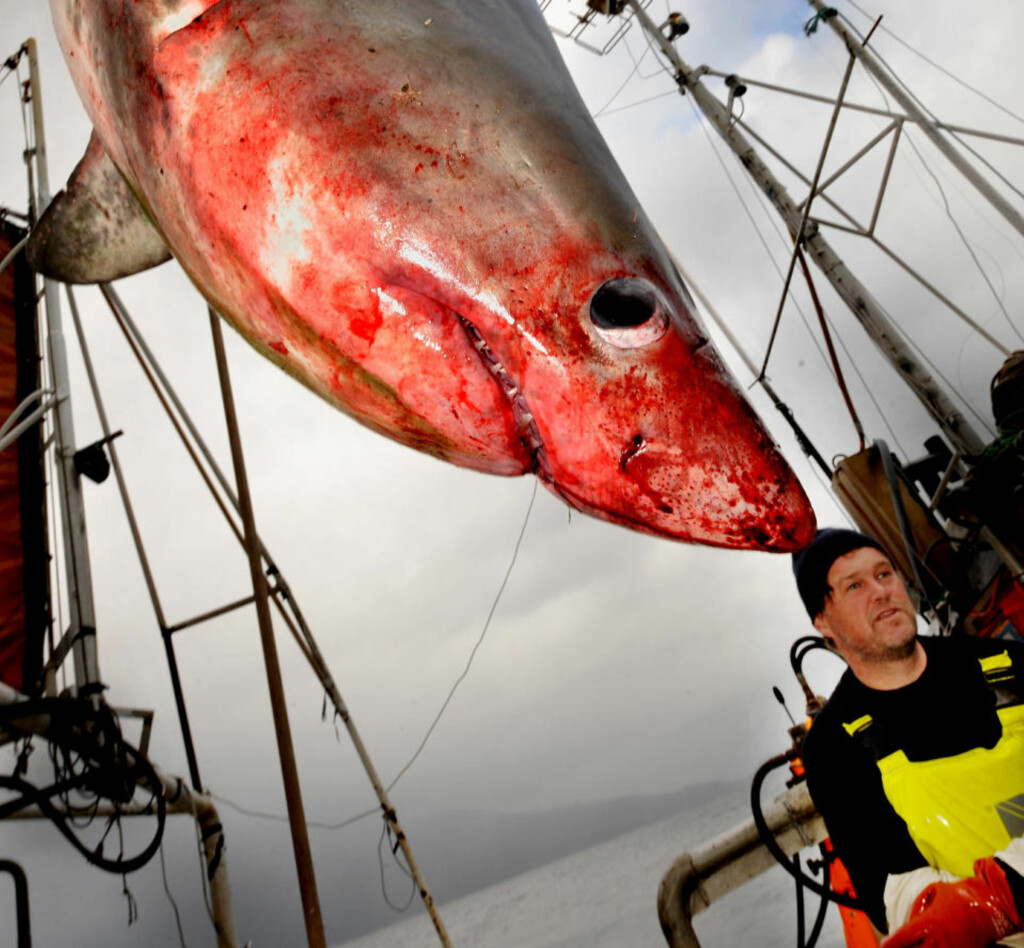 FIKK NAPP: Sjarkfisker Andre Fredriksson (44). Foto: Knut Arne Aarset, Sunnmørsposten