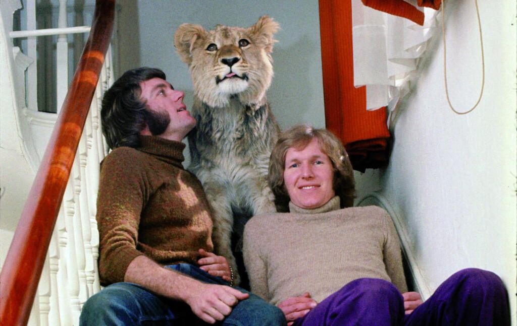 VOKSTE OPP I LONDON: Løven Christian sammen med fosterforeldrene John (til venstre) og Ace i en leiligheten i Chelsea i London. I bakgården lekte løven og den trivdes også innendørs, selv om han vokste veldig fort. Bildet er fra 1969. Foto: En løve ved navn Christian/Versal forlag