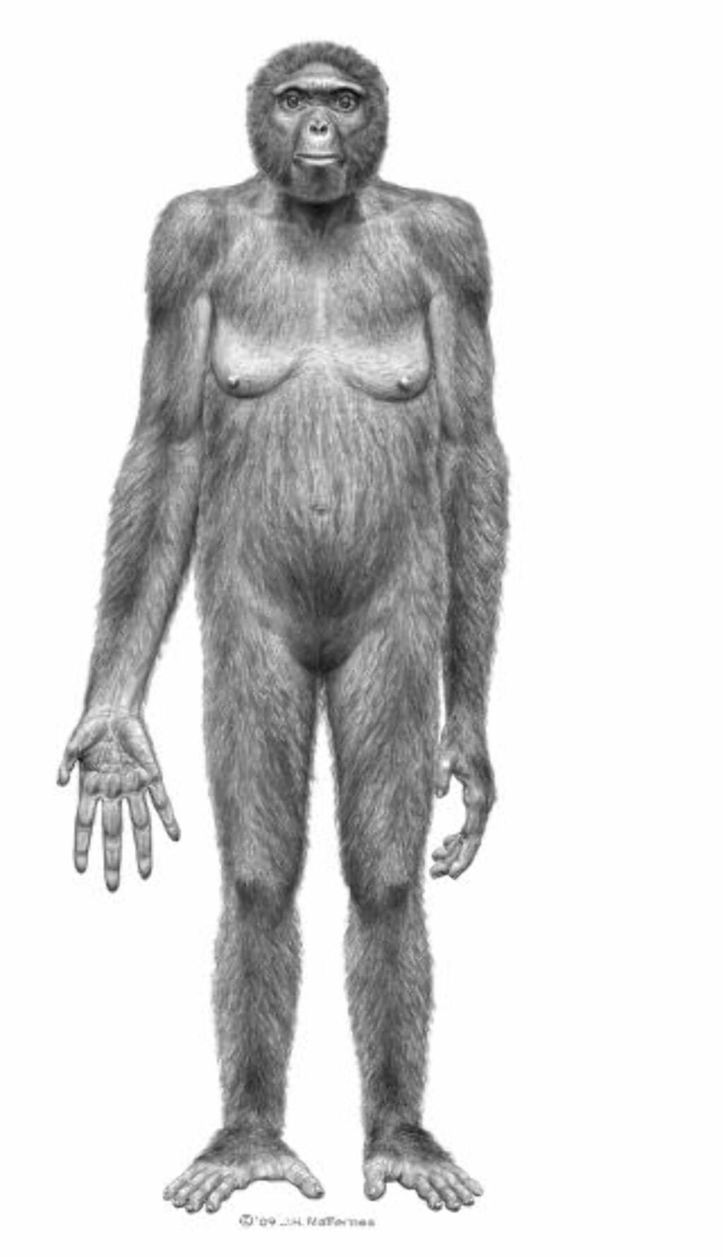 APEMENNESKE: Forskerne mener Ardi er et bevis på at mennesket ikke stammer fra apene, men at vi har samme stamfar. De to artene skal så ha utviklet seg vekk fra hverandre. Forskerne mener Ardi er det nærmeste vi så langt kommer en felles stammor. Foto: Reuters