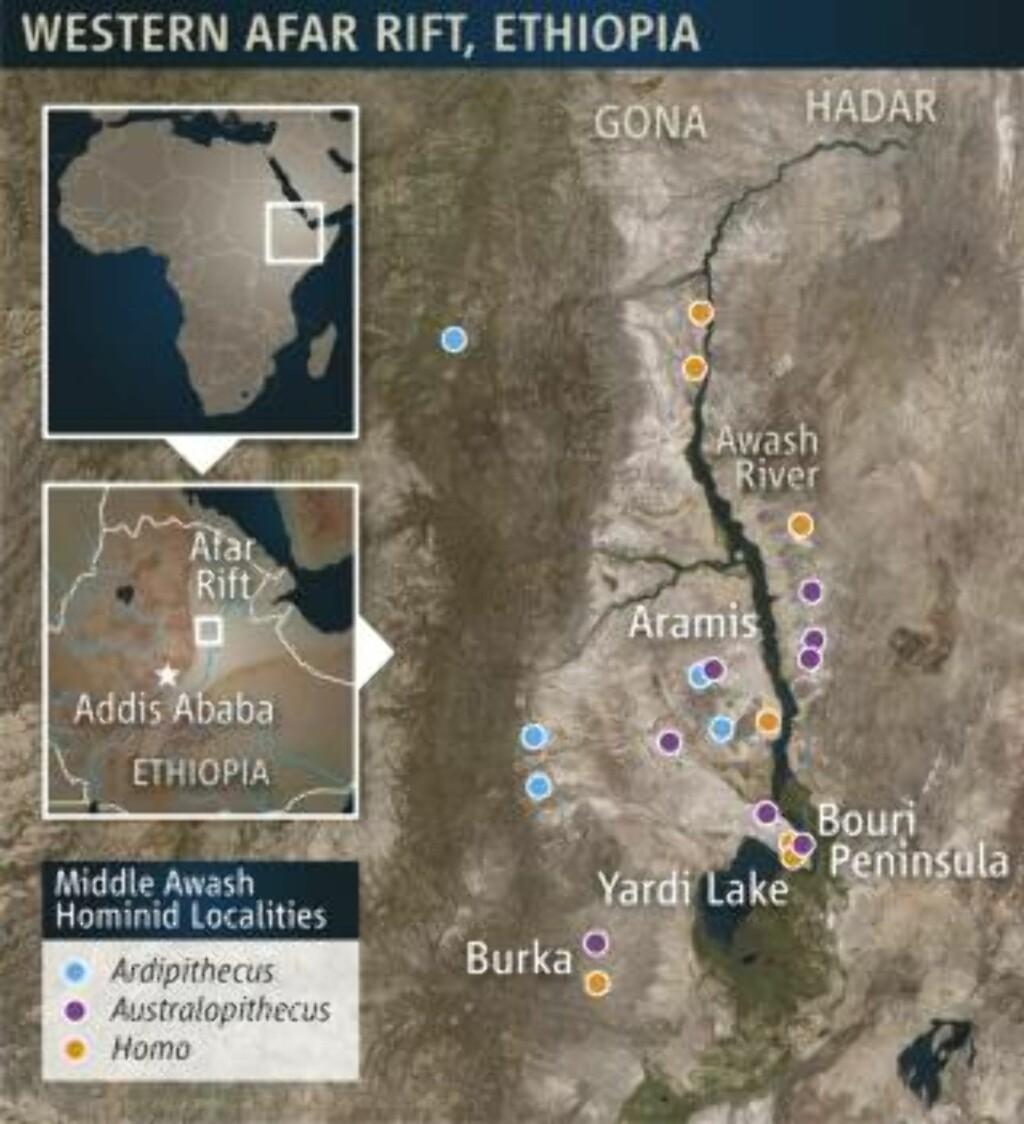 ARDIS HJEM: Ardi ble funnet ved Afar Rift i Etiopia, et vulkansk område kjent for mange fossilfunn. Illustrasjon: Reuters