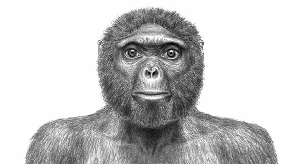 HILS PÅ ARDI: Slik mener forskerteamet bak Ardi at hun kan ha sett ut da hun vandret rundt i skogkledde omgivelser i dagens Etiopia for 4,4 millioner år siden. Foto: Reuters