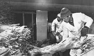 MÅTTE SLAKTE: Det var utmarksnæringene som virkelig ble rammet av Tsjernobyl-katastrofen i Norge. Store mengder sau og rein måtte slaktes sommeren og høsten 1986, uten at kjøttet kunne spises. Senere kom man i gang med nedforingstiltak for å unngå massiv nedslakting. Foto: NTB Scanpix