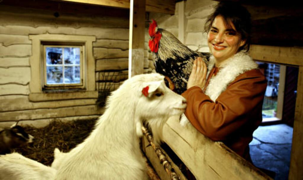 HANEFAR:Kerstin Ulrich driver  Per Tørresgården på Røros. I stallen breker geitene og hanefar elsker å bli holdt av matmor. Foto: Ole.C. H. Thomassen