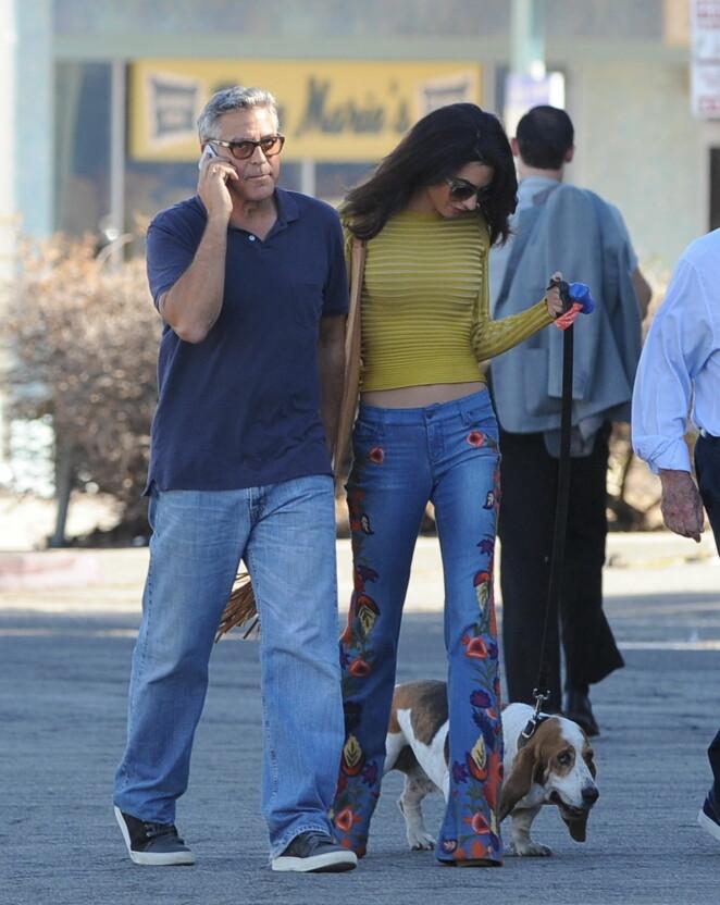 DYREELSKERE: Denne høsten er George Clooney travel som regissør for filmen «Suburbicon», som har kameraten Matt Damon i en av hovedrollene. I slutten av oktober var Amal og hunden deres Millie på besøk på filmsettet i Los Angeles. Foto: Cousart/JFXimages/WENN.com/ NTB Scanpix