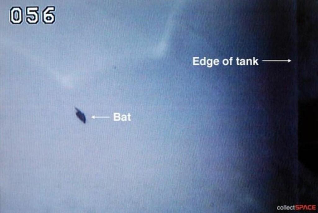 SOV: En flaggermus slo seg ned på den eksterne drivstofftanken på romferja Discovery like før oppskyting i natt. Foto: Collectspace.com/NASA