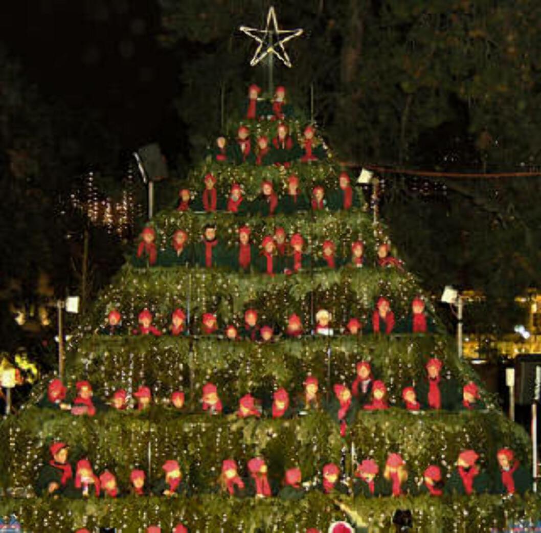<strong>SYNGENDE TRE:</strong> På rad og rekke står de og synger. Med røde luer ligner koristene små kuler som henger på treet.Foto: The singing christmas tree