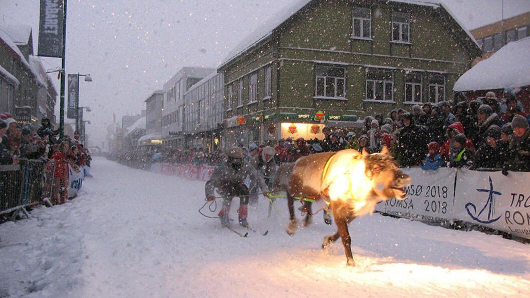 <strong>REINKAPPLØP:</strong> NM i reinkappløp er etter Lonely Planets mening nummer en på lista over «Best Christmas Crackers». Foto: Midnight Sun Marathon, Tromsø.