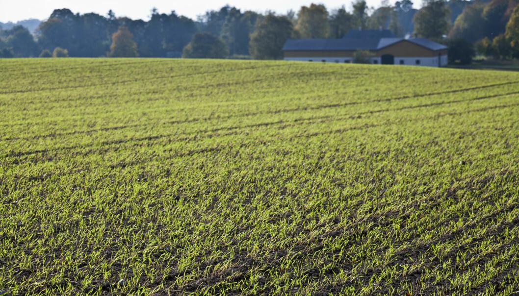 FÆRRE GÅRDER: Det har ikke blitt flere gårder. Det er 2500 færre siden regjeringsskiftet, skriver artikkelforfatteren som et svar til Frp's Åse Michalsen. Foto: NTB Scanpix