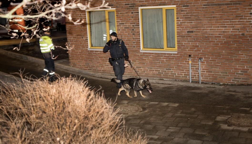 <strong>SØK:</strong> Store politistyrker var ute mandag kveld for å søke etter spor og gjerningspersonene. Foto: Tomm W. Christiansen