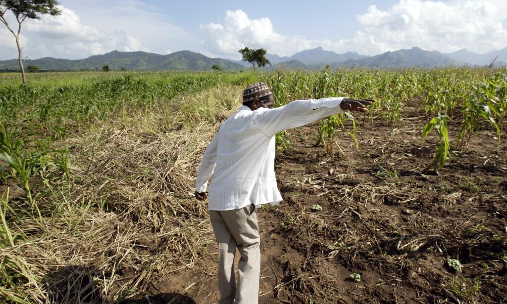 MYTER OM SMØBØNDER: Det som har skjedd er altså at afrikanske storbønder har blitt til småbønder, 95 prosent i Afrika sør for Sahara har blitt til 70 prosent i verden og ei fjær har praktisk talt blitt til ti hønehus i en moderne versjon av hviskeleken, skriver Øystein Heggdal. Her fra en maismark i Iringa, Tanzania.