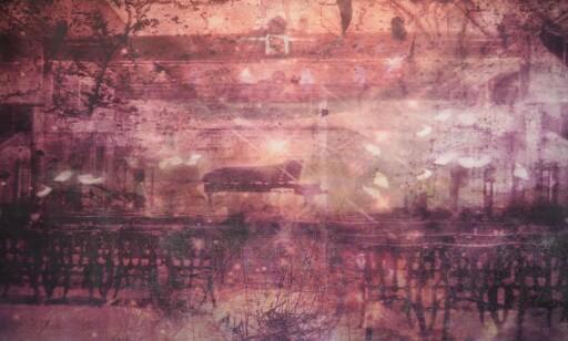 DEICHMANNSKE: Bildene i serien «Broken glass in passions library» er inspirert av flyttingen av Deichmannske bibliotek, som Werp er imot.