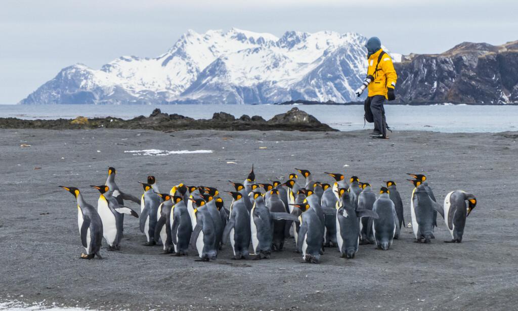 SØRPOLEN: Sør-Georgia nær Antarktis pekes ut som et av områdene stadig flere ønsker å se. Foto: NTB Scanpix