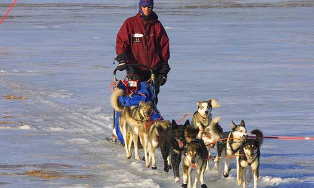 NORSK FAVORITT: Bjørnar Andersen stiller med bikkjer som har kjørt Iditarod før. Og han har fjorårsvinner Robert Sørlie som hjelpemann. Problemet er bare bikkjetransporten til start. Foto: Scanpix