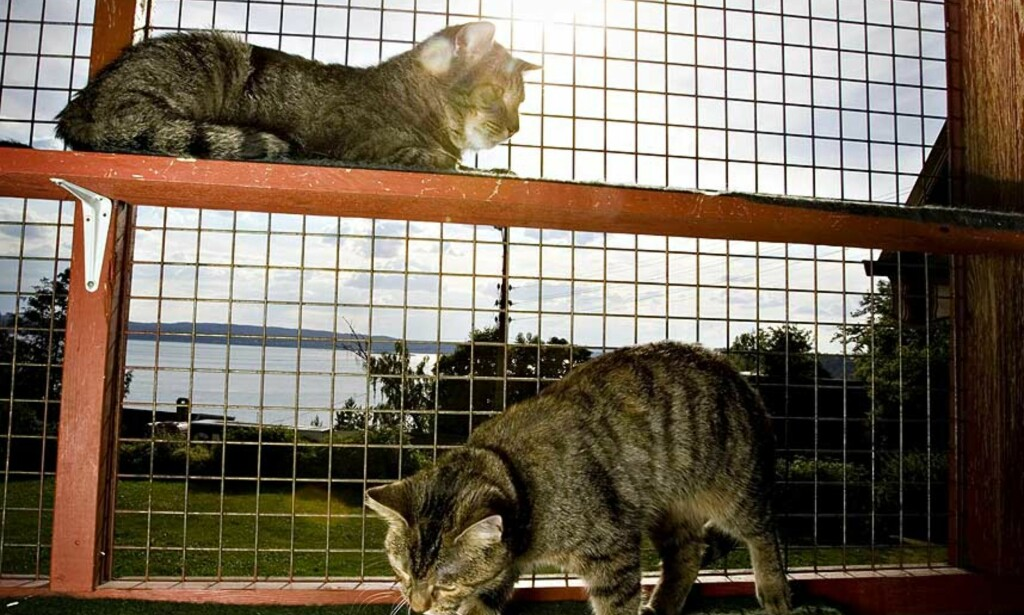 HJEMLØSE: Ikke alle hjemløse katter får det bedre hos folk som henter dem. Foto: Bjørn Langsem