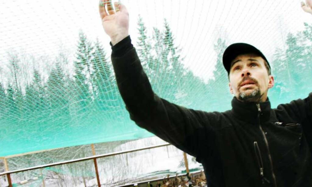 MITT LEVEBRØD: Kenneth Nilsson driver oppdrett av ville ender like utenfor smitteområdet i Oskarshamn. Han gjør det han kan for å unngå at smitten besetningen hans. Foto: Frank Karlsen