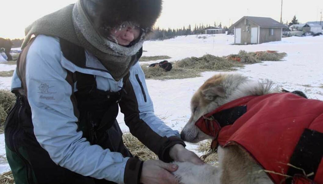 <strong><b>HUNDENE FØRST:</strong></b> Norske Sigrid Ekran steller med en av hundene sine i Nikolai. Foto: Scanpix