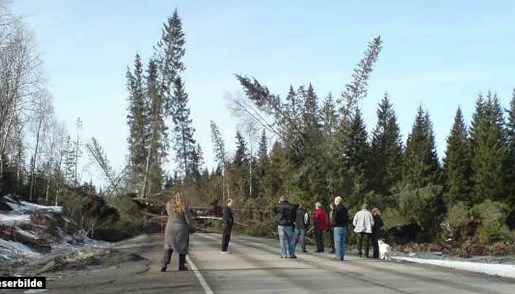 <strong><B>STØRRE RAS:</strong></B> Et stort område med skog og leire sperrer nå riksvei 17 i Nord-Trøndelag. Foto: STIG SOLHEIM STRØM