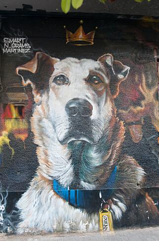 HEDRET: Hunden Loukanikos var ofte å se i forgrunnen under opptøyene i Aten i 2011. Da Loukanikos døde i 2014 ble det antydet at hans død var fremskyndet av tåregassen politiet brukte under demonstrasjonene. Foto: Marianne Wie