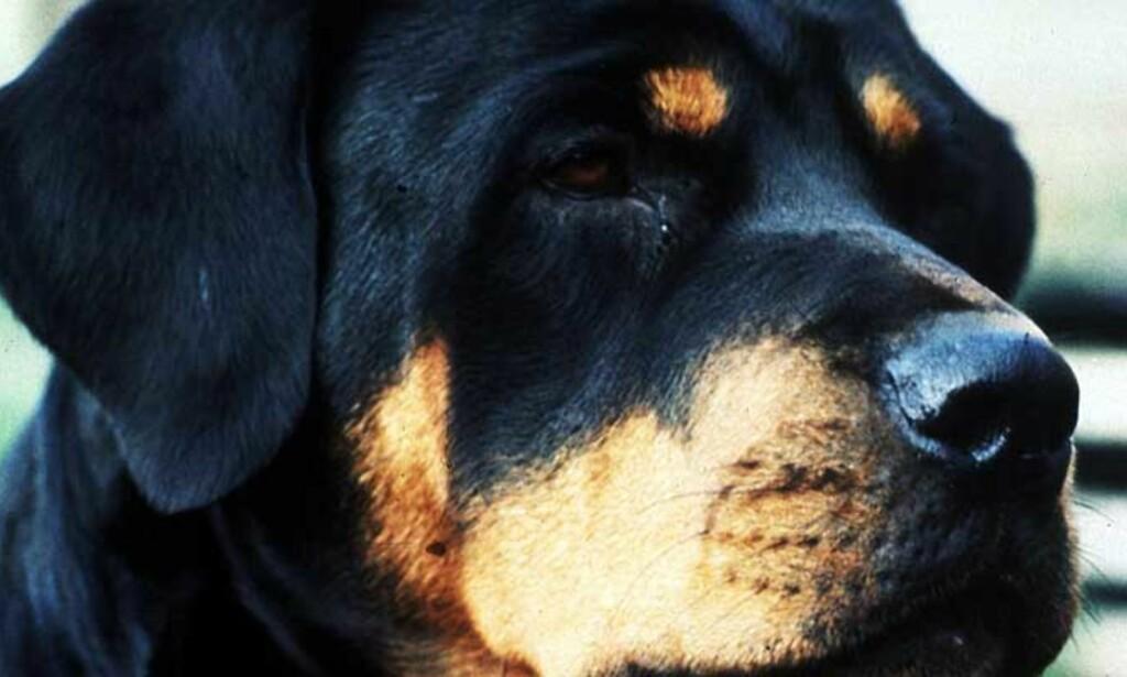 REDDE BARN: Hunden bet alle de tre barna. Den ene i rompa, den andre i leggen og den tredje i armen. De ble veldig redde og klatret opp i et tre. Foto: SCANPIX