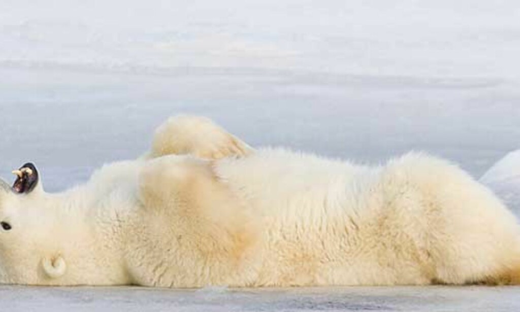 image: Klimatabbe gikk Norge rundt