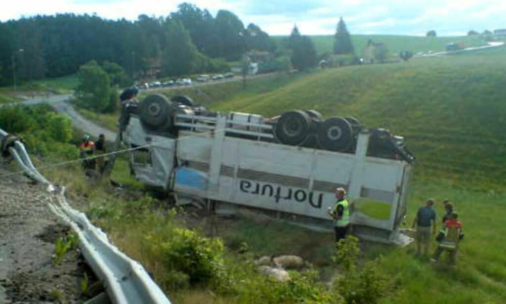 KJØRTE AV VEIEN: Dyretransporten har kjørt av veien og landet på taket. Foto: Arild Enger/Global Foto.no