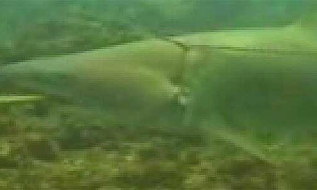 image: Dykkere trodde haien hadde svelget feiekost