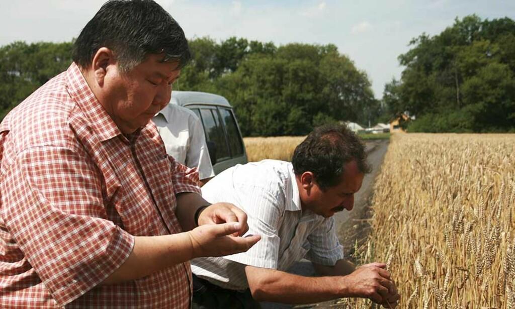 FORNØYDE: Murat Sjamsjinurov (t.v.) og Valerij Jurov jobber begge for kornselskapet Nastjusja, som har investert tungt i russisk jordbruk. De kan glede seg over at det går mot den beste kornhøsten på flere tiår. Foto: REUTERS/Robin Paxton/SCANPIX