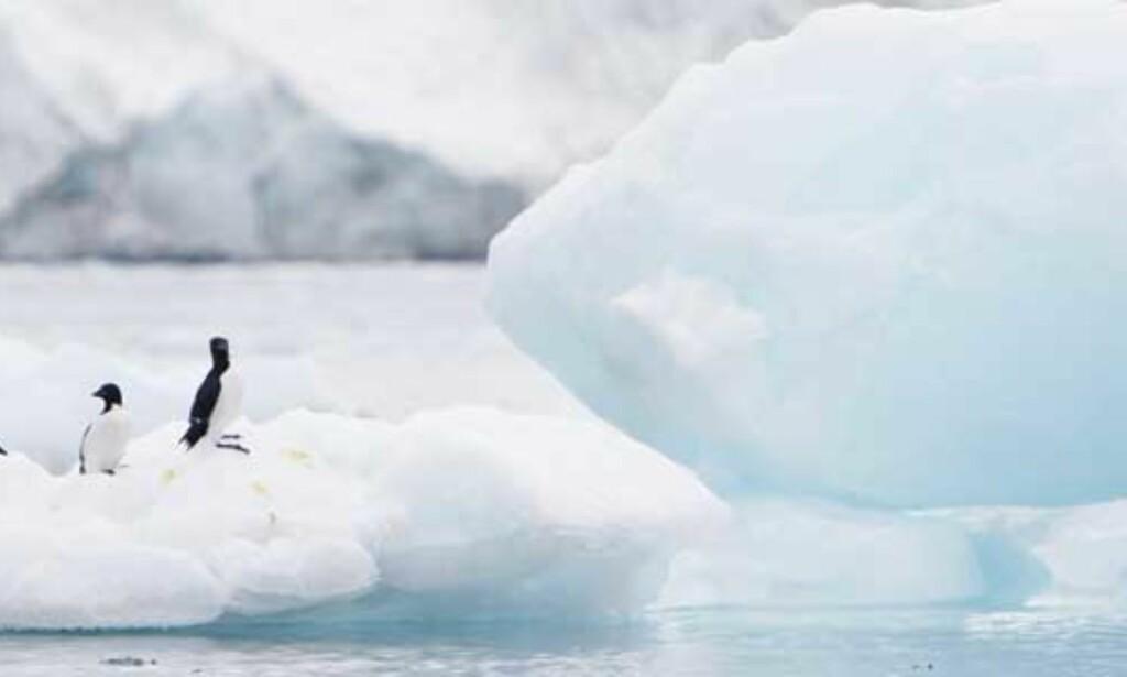 image: Rekordmye is har smeltet