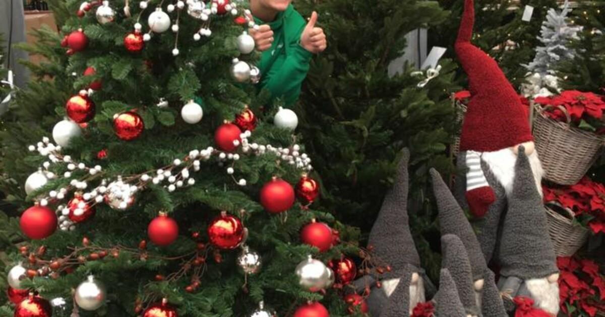 Herlig Selger plasttrær til 13 000 kroner. Har solgt 20 allerede - Dagbladet UQ-72