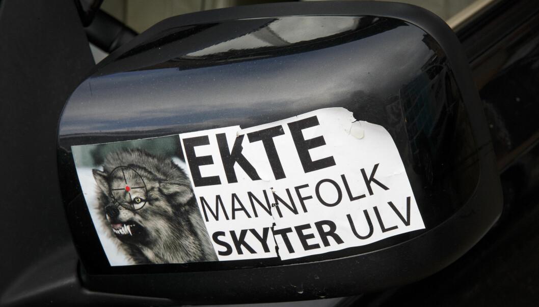 <strong>KLAR MELDING:</strong> Sterke motsetninger mellom de som vil verne og de som vil felle ulv. Foto: Heiko Junge / NTB Scanpix