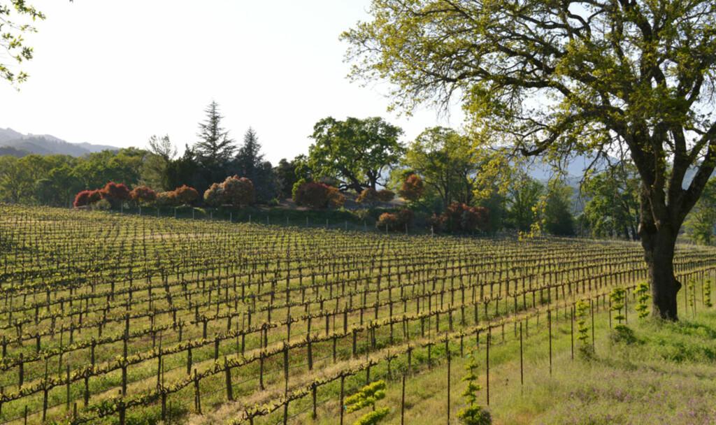 I Napa Valley kan du smake på en av verdens beste viner. Husk bare å la noen andre overta rattet etterpå! Foto: Ronny Frimann