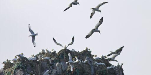 image: Se mot nord i FNs internasjonale år for bærekraftig turisme!