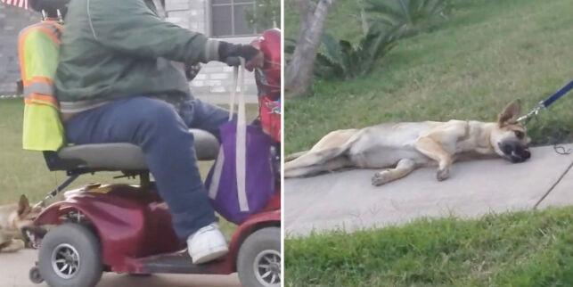 image: Fikk naboen arrestert etter denne videoen: - Folk som ham, burde ikke hatt dyr