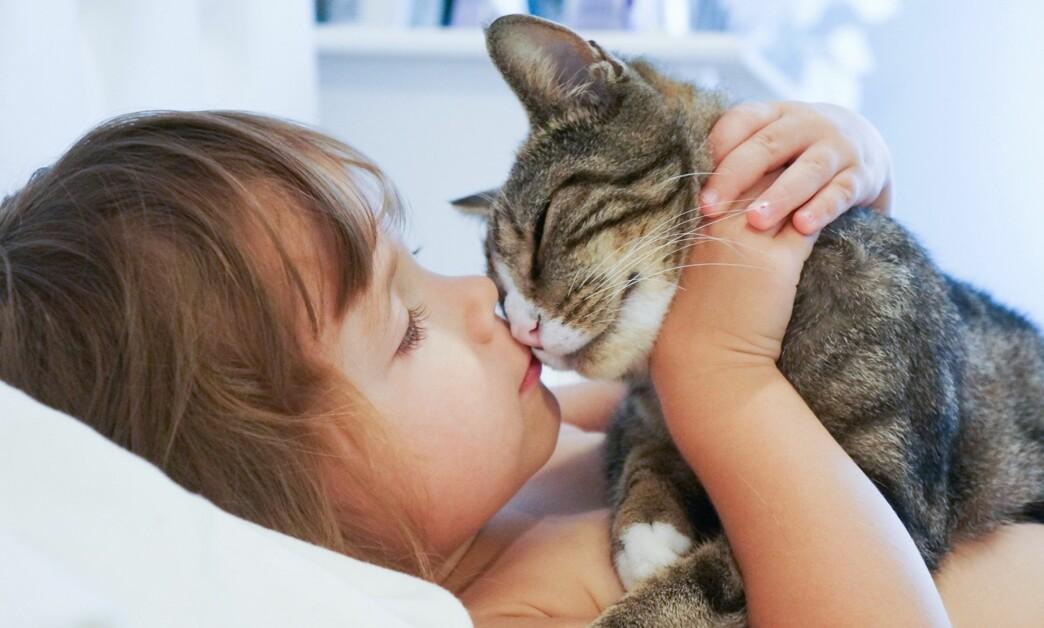 DYREALLERGI BARN: Mange med dyreallergi reagerer på katt, som har spesielt aggressive allergener. Foto: NTB Scanpix