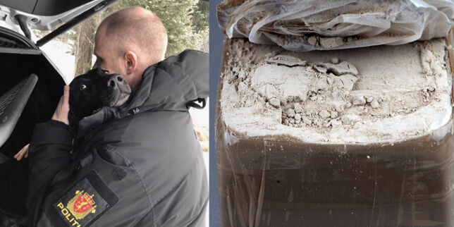 image: Politihunden Gustav hylles etter enormt narkobeslag. Nå meldes det om herointørke i Oslo