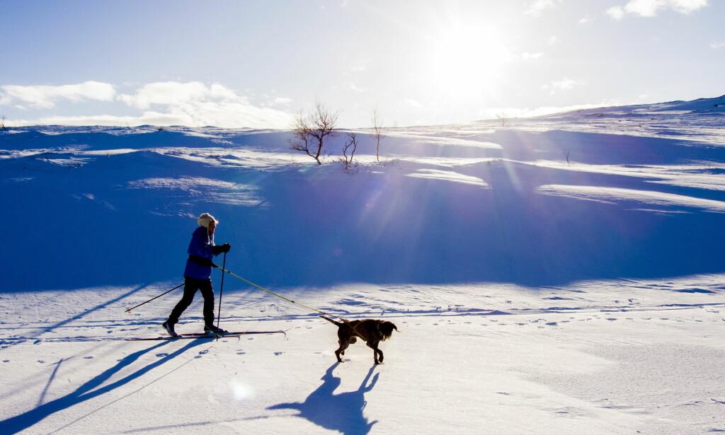 VIL DU GJØRE DETTE I HELGA? Da kan kommende helg være en fin anledning. I hele landet er det meldt sol og minusgrader. Foto: Thomas Rasmus Skaug / Dagbladet