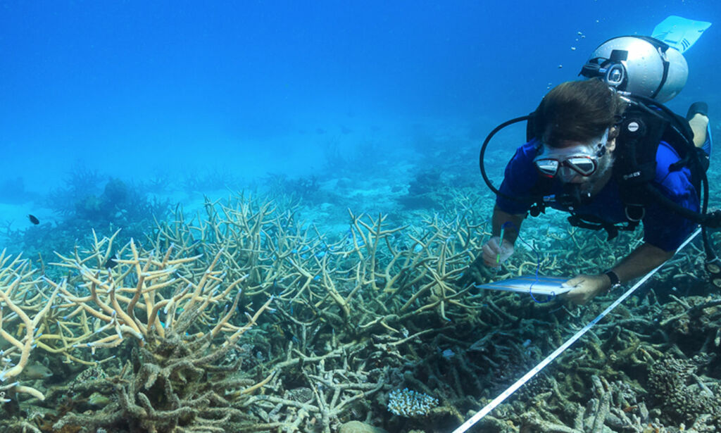 image: Gråt da de så hvilken forfatning verdens største korallrev er i
