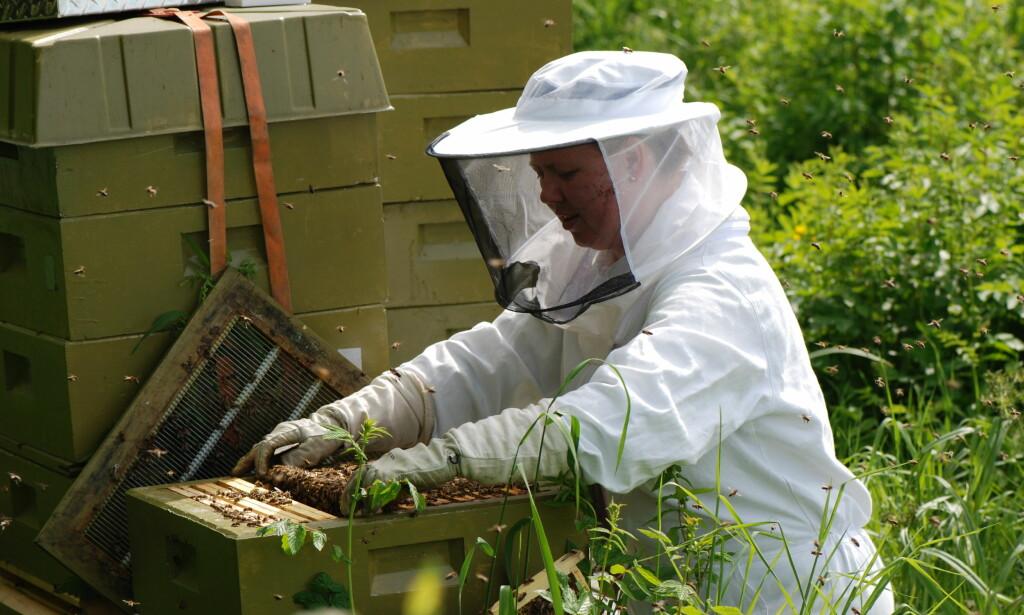 VIKTIG: - Birøkt bidrar også til pollinering av ville vekster, og er dermed med på å opprettholde artsmangfoldet, sier Eli Åsen i Norges Birøkterlag (bildet). Foto: Trond Gjessing