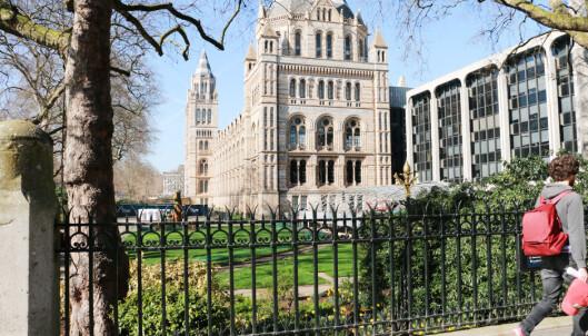 <strong>SENTRALT:</strong> Mange av Londons museer ligger i sentrum av byen, deriblant naturhistorisk museum på bildet, og Science Museum, som er innenfor samme område i Kensington.