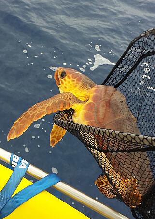 FISKELYKKE: En havskilpadde forvillet seg borti fiskekroken, til Troys store henrykkelse. Selv om skilpadda var forbanna, gikk det bra, og forhåpentligvis svømmer den rundt i Atlanteren fortsatt.