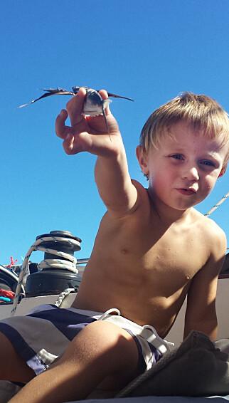 BESØK OM BORD: Troy inspiserte stadig skuta for flyvefisk.