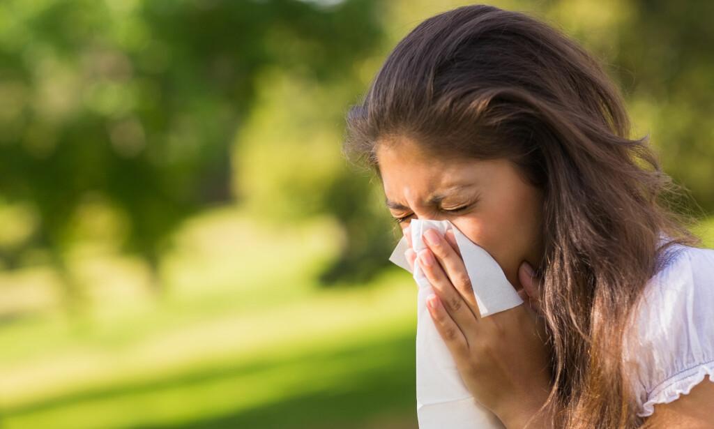 POLLENALLERGI? Sjekk om du kan få sykemelding på dager med de verste plagene. Foto: NTB Scanpix